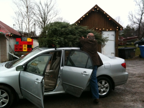 Raymond loads our absolutely perfect Christmas tree – I do believe it is the most perfect Christmas tree I have ever had – into the roof of our car at the Burnside Tree Farm lot at the Madoc Dairy.