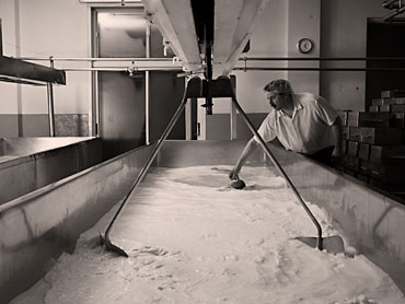 Cheese being made at the factory in – well, I won't tell you where; you have to read to the end of the post. But I am reliably informed it is the best cheddar around. (Photo courtesy of the mystery cheese co-operative to which I am in the process of giving a great big plug)