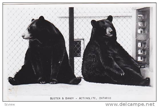 You never know what you'll find on the internet: tonight I discovered this vintage postcard featuring Actinolite's Buster and Bandy. It's for sale by a U.S. collector here. (Photo from delcampe.com)