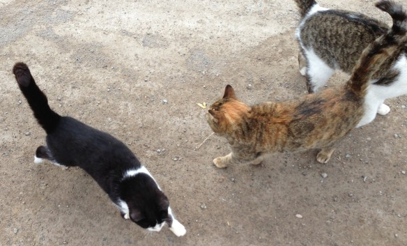 Super-friendly barn cats, more than happy to soak up some attention.