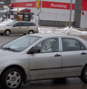 Spotted in the Madoc Foodland parking lot. Do you think this driver knows about the rural wave? (Photo by Raymond Brassard)