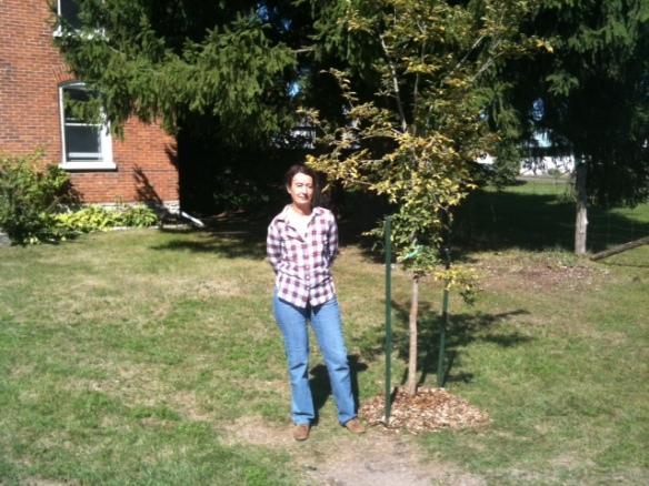 Katherine elm tree