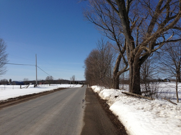 This is part of the stretch of Queensborough Road lined by maples (unfortunately only on one side now) that my father used to tap to make maple syrup back in the 1960s and 1970s. Those trees are showing their age now.