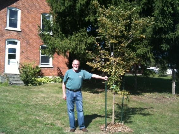 Raymond elm tree