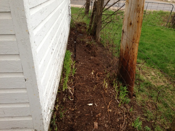 AFTER: Note rich-looking soil, general tidiness – and all those healthy-looking day-lily shoots!