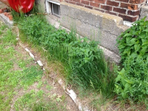 The tall grass was taking over the perennial garden at the side of the house. It had to go – snake or no snake.