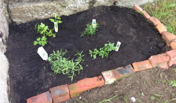 Meet our new herb garden at the Manse: clockwise from top left, Italian parsley, rosemary, oregano and tarragon. And there's lots of room for the others still to come.