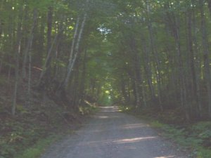 The Old Hastings Road as it looks today; the farm fields of the late 19th century are long gone, and the trees and bush have reclaimed the land. (Photo from Ontario Abadoned Places (ontarioabandonedplaces.com), which has an excellent post, with more photos, on the Old Hastings Road here.