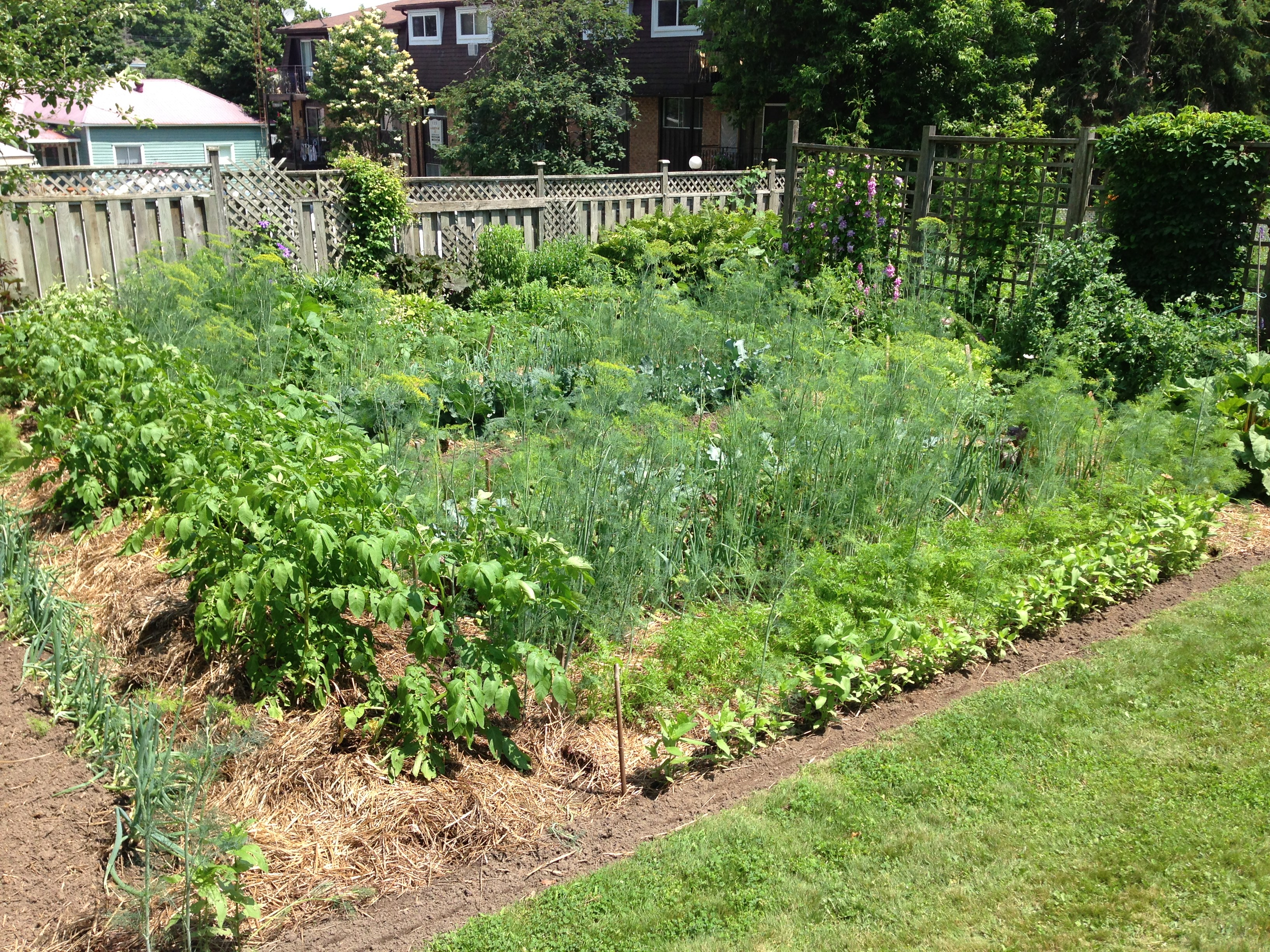 beautiful vegetable garden | meanwhile, at the manse