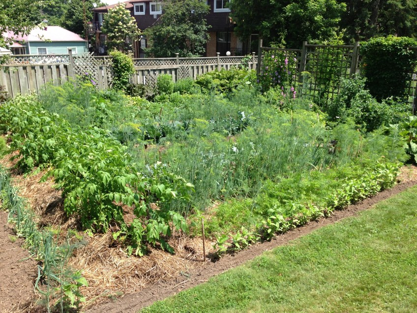 beautiful vegetable garden meanwhile at the manse