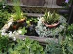 Miniature pond on the Tweed Garden Tour