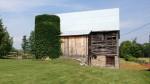 Boston ivy on the silo, Tweed Garden Tour
