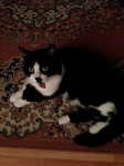 Sieste on the living-room rug