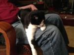 Sieste in Raymond's lap
