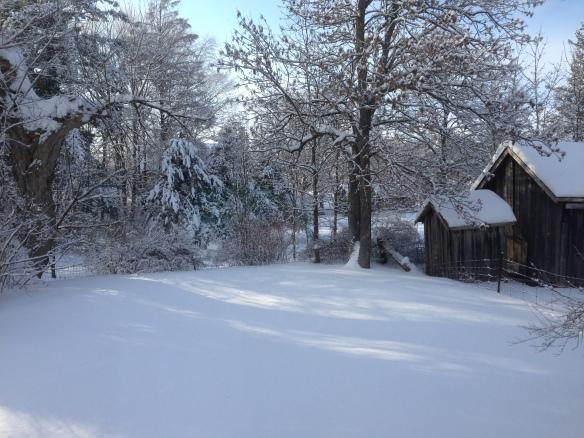 Manse back yard, Boxing Day 2013