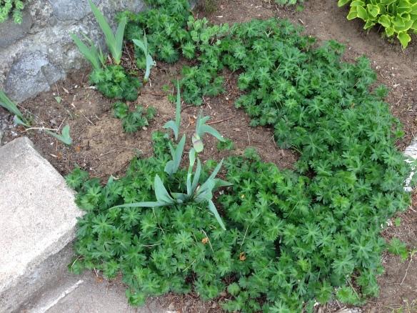 Garden takeover plant 1