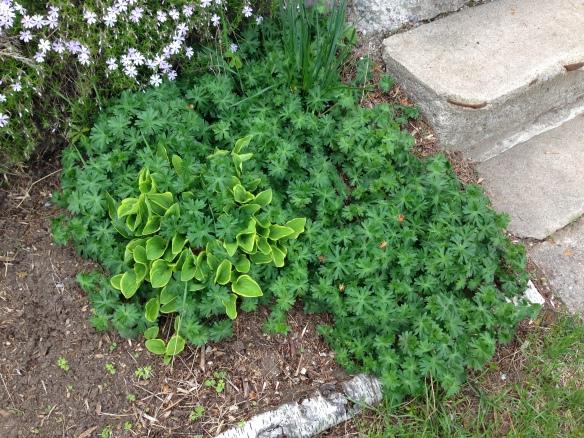 Garden takeover plant 2
