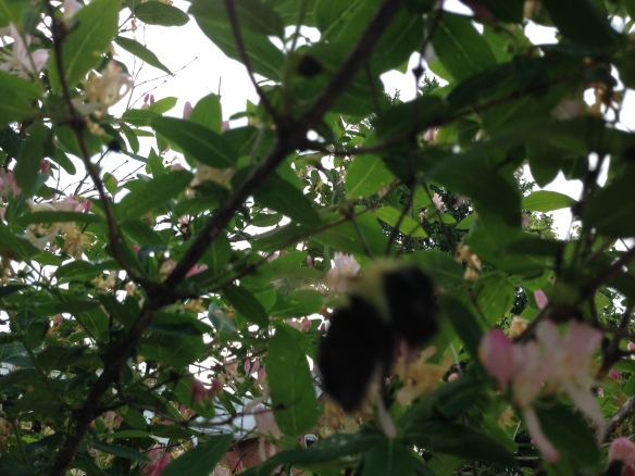 One of our bumblebees