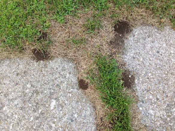 Ant holes