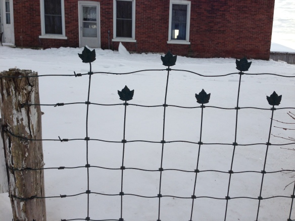 Maple Leaf fence, rural Hastings County