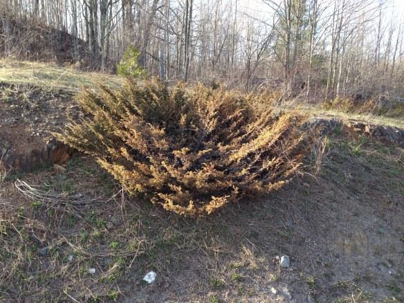 Round bush closeup