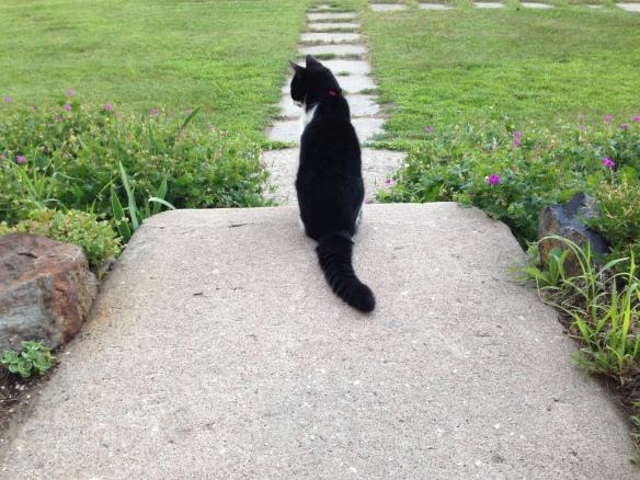 Sieste surveying her domain 2