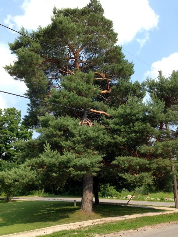 Tree of Life July 2014