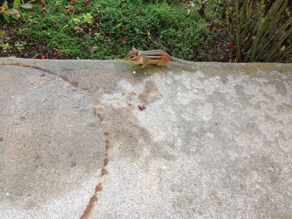 Chipmunk comes to complain