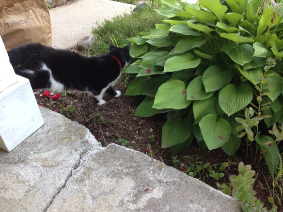 Sieste goes after the chipmunk