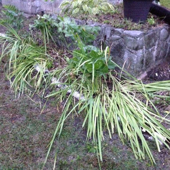 Mussed-up garden