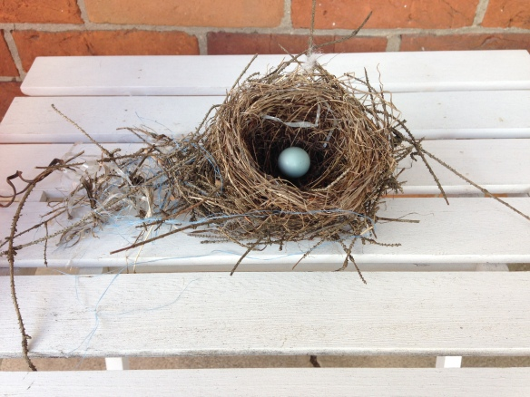 Beautiful bird's nest