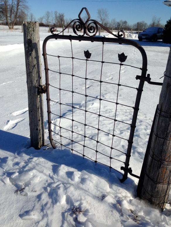 Maple leaf fence 2