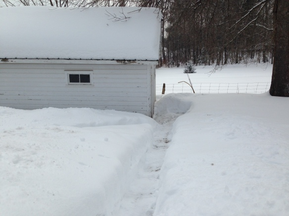 Path to garage shovelled