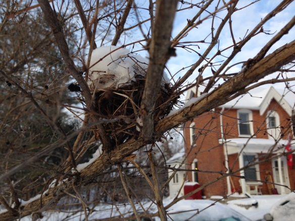 Tiny bird's nest in early February