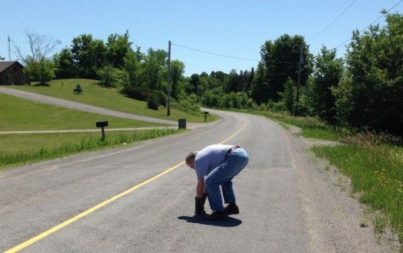 Helping a turtle on Barry Road