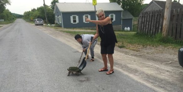 Directing traffic while helping the turtle
