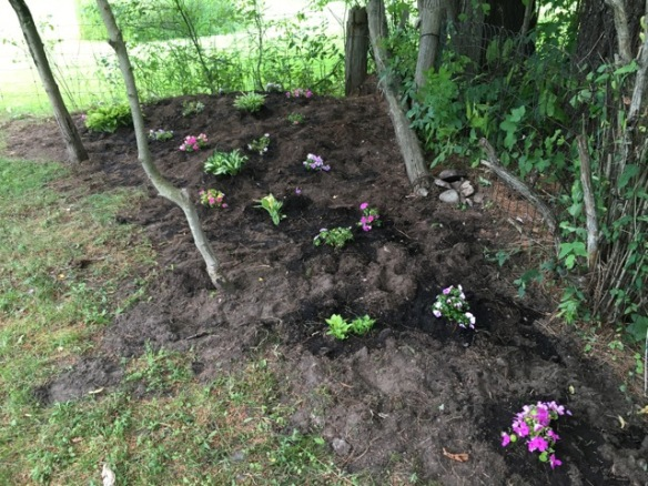 Shade garden after 1