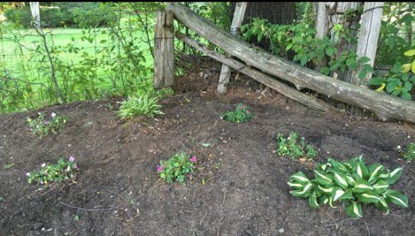 Shade garden, Aug. 1, 2016