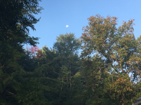 Morning moon closeup