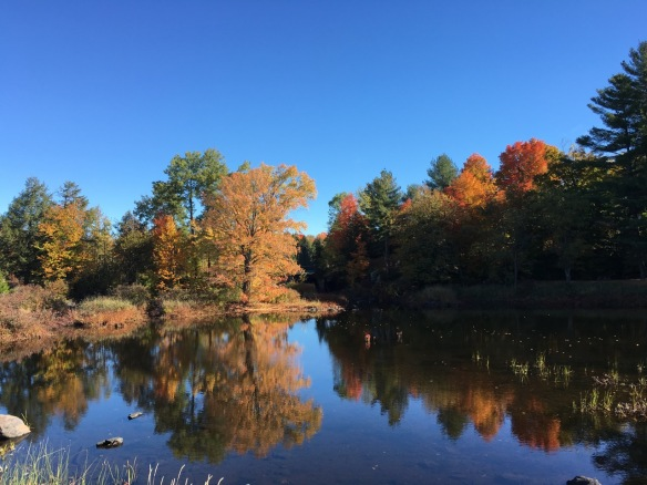 Black River, Queensborough, Fall 2016