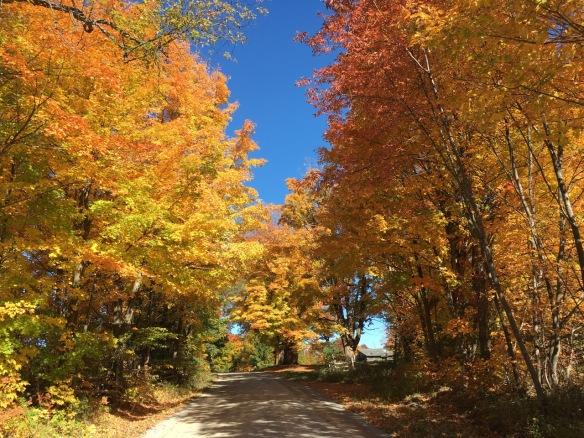 Hunt Club Road 4, Fall 2016