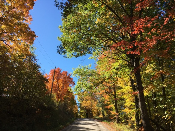 Hunt Club Road, Fall 2016
