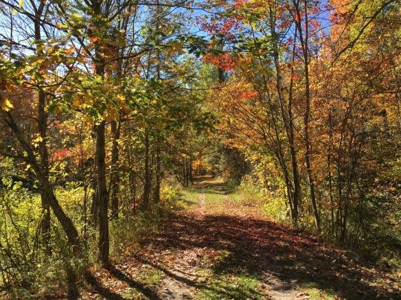 Laneway, fall 2016