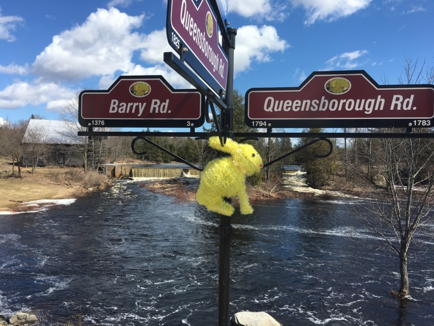 Bunny on street signs