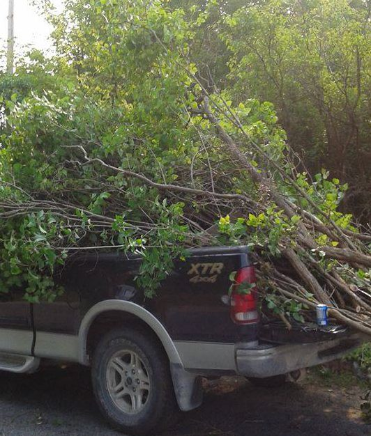 Johnny's truck loaded with cleared brush