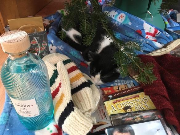 Roscoe under the tree, Christmas 2017