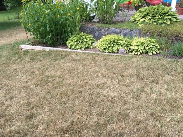 Parched lawn