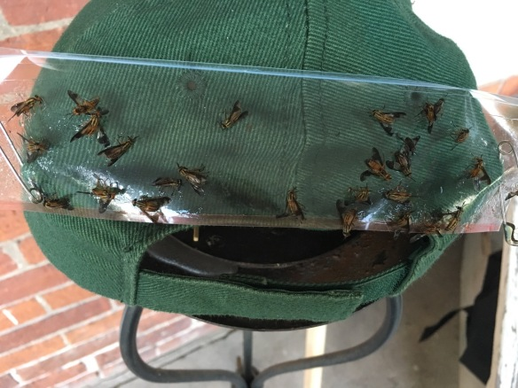 Cap with deerflies