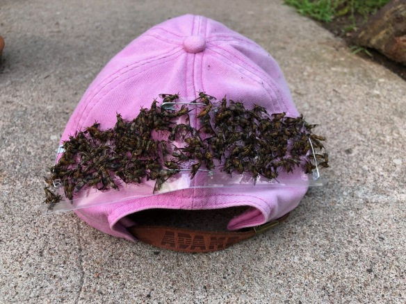 Hat filled with dead deerflies