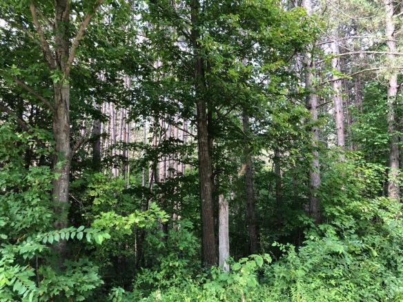 The woods that harbour deerflies